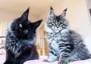 Leaena Kittens