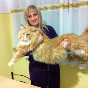 Leaena Main Coon Cattery - Cat Leo